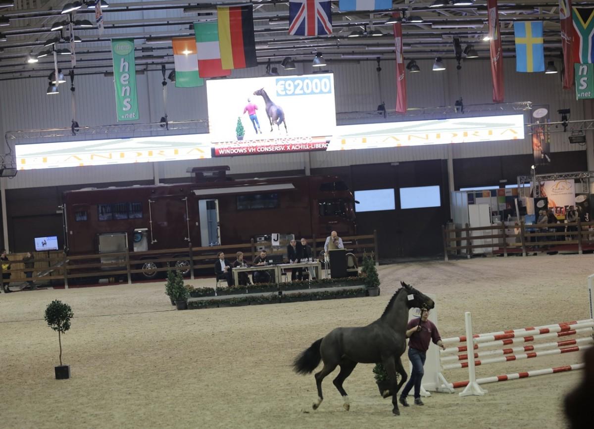 Cornet zoon veilingtopper 'BWP Top Stallion Auction'