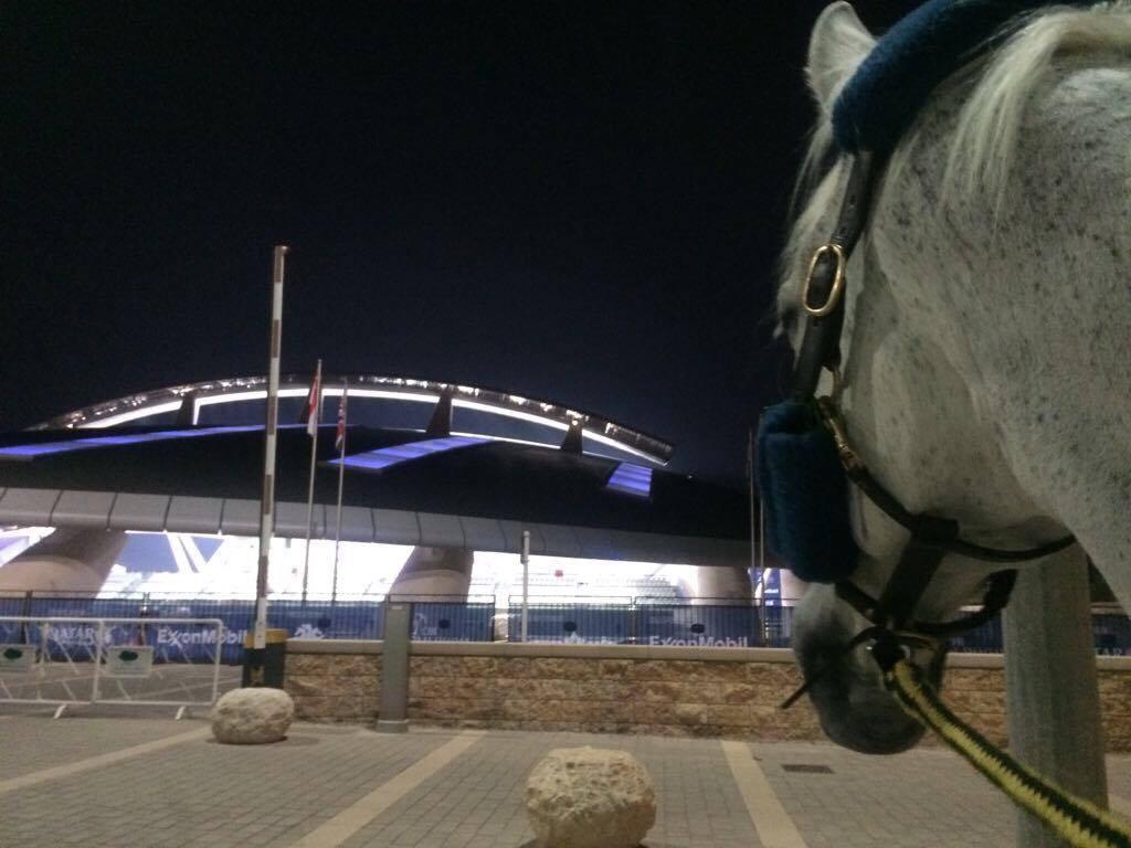Dressage horses blocked in FEI Database