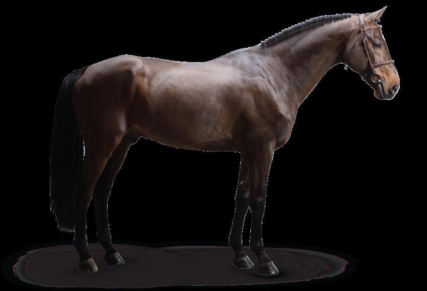 Stallion Spotlight: Warrant