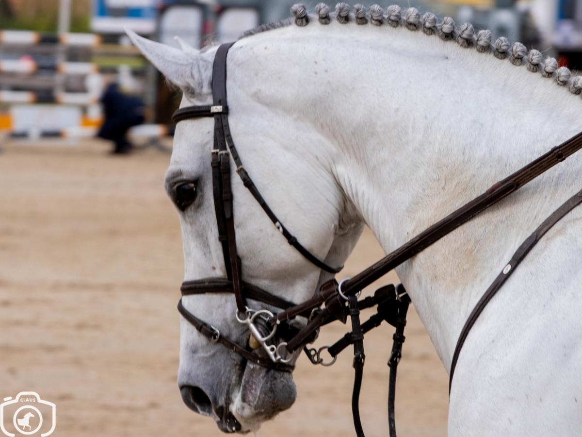 Ruiter zwaargewond na val van jong paard