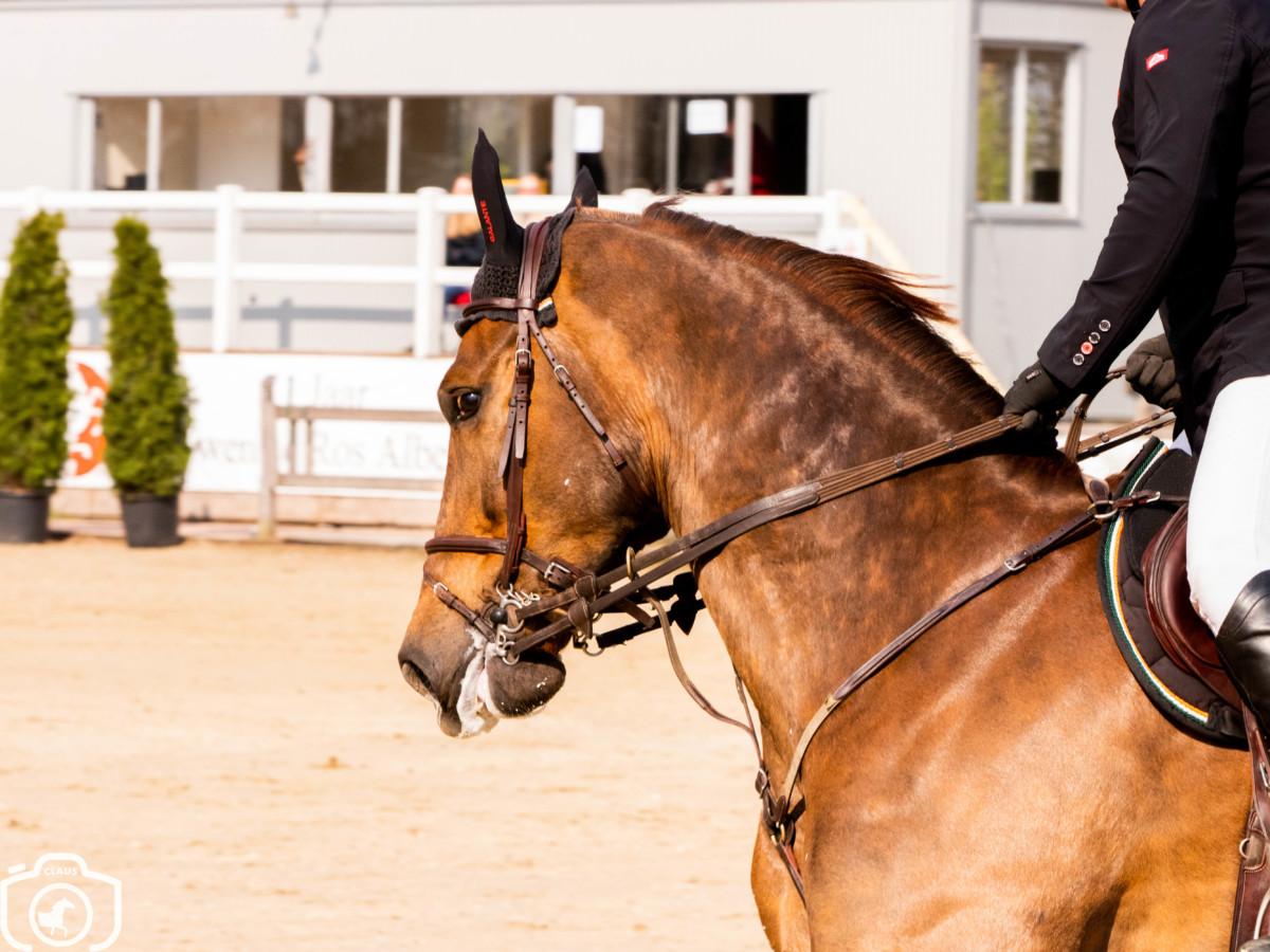 Padock du Plessis, Montender en Casall leveren de kampioenen in Fontainebleau