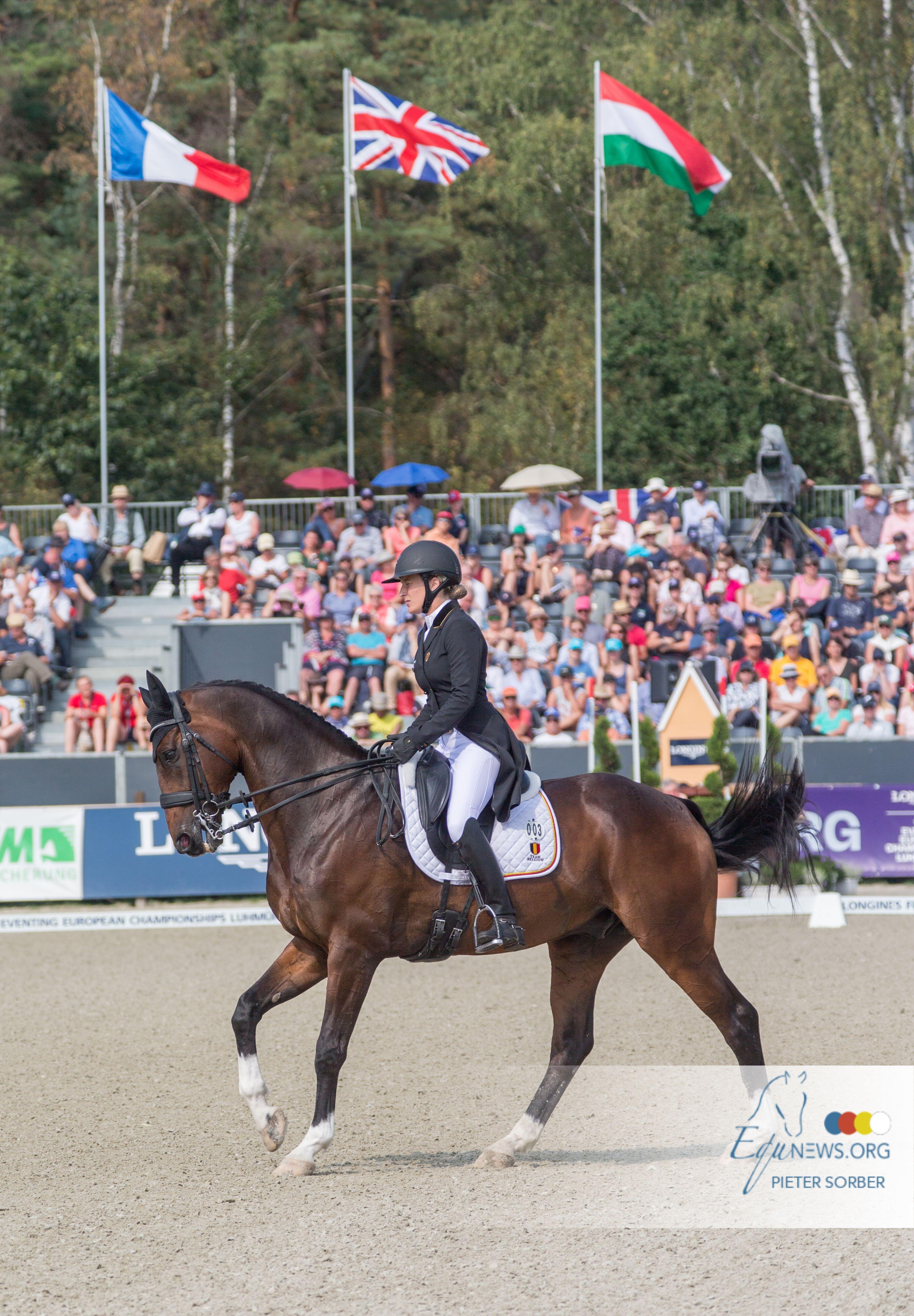 Sport belge de haut niveau aux championnats d'Europe de concours complet avec une troisième place provisoire au classement par équipes