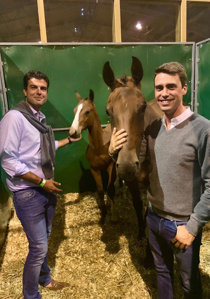 """Belgian Foal Auction: meilleure enchère pour """"Tiamo Van Het Scheefkasteel"""" par St Stables."""