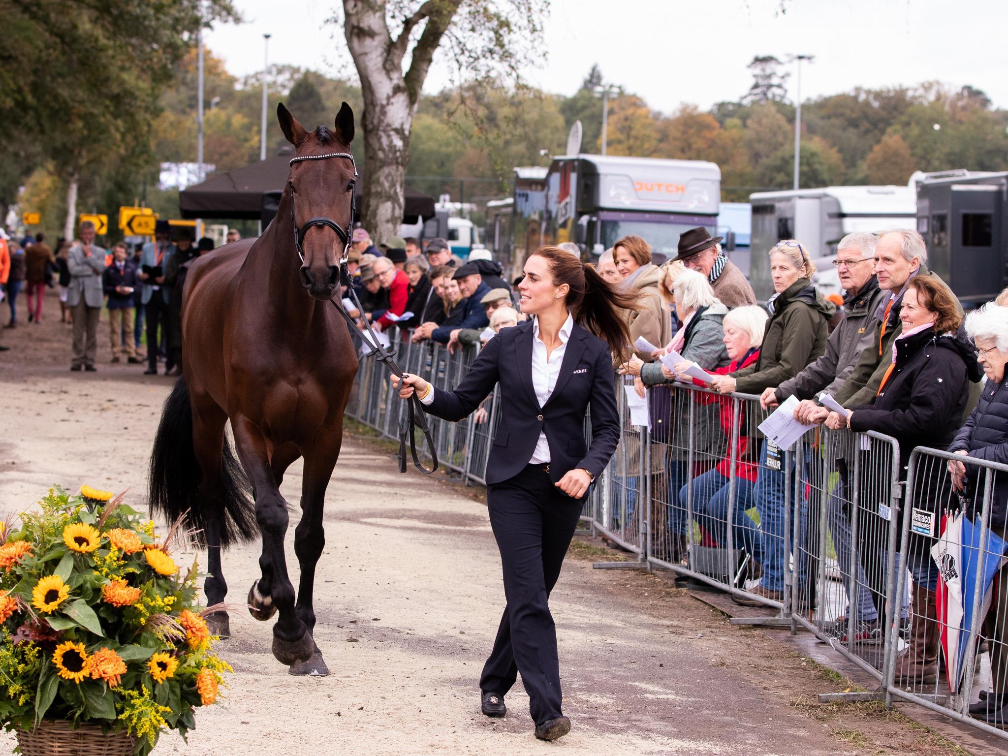 """Nederlandse paarden fit to compete in Boekelo : """"Op naar Tokyo?"""""""