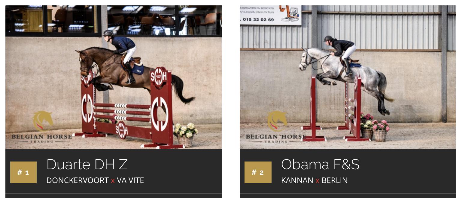 Belgian Horse Trading prêt pour une magnifique vente aux enchères