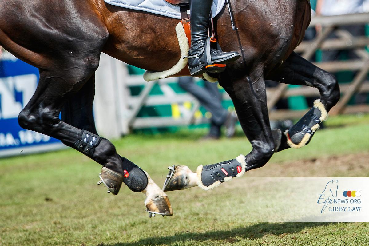 Duits kampioenschap jonge paarden zal zonder publiek plaatsvinden