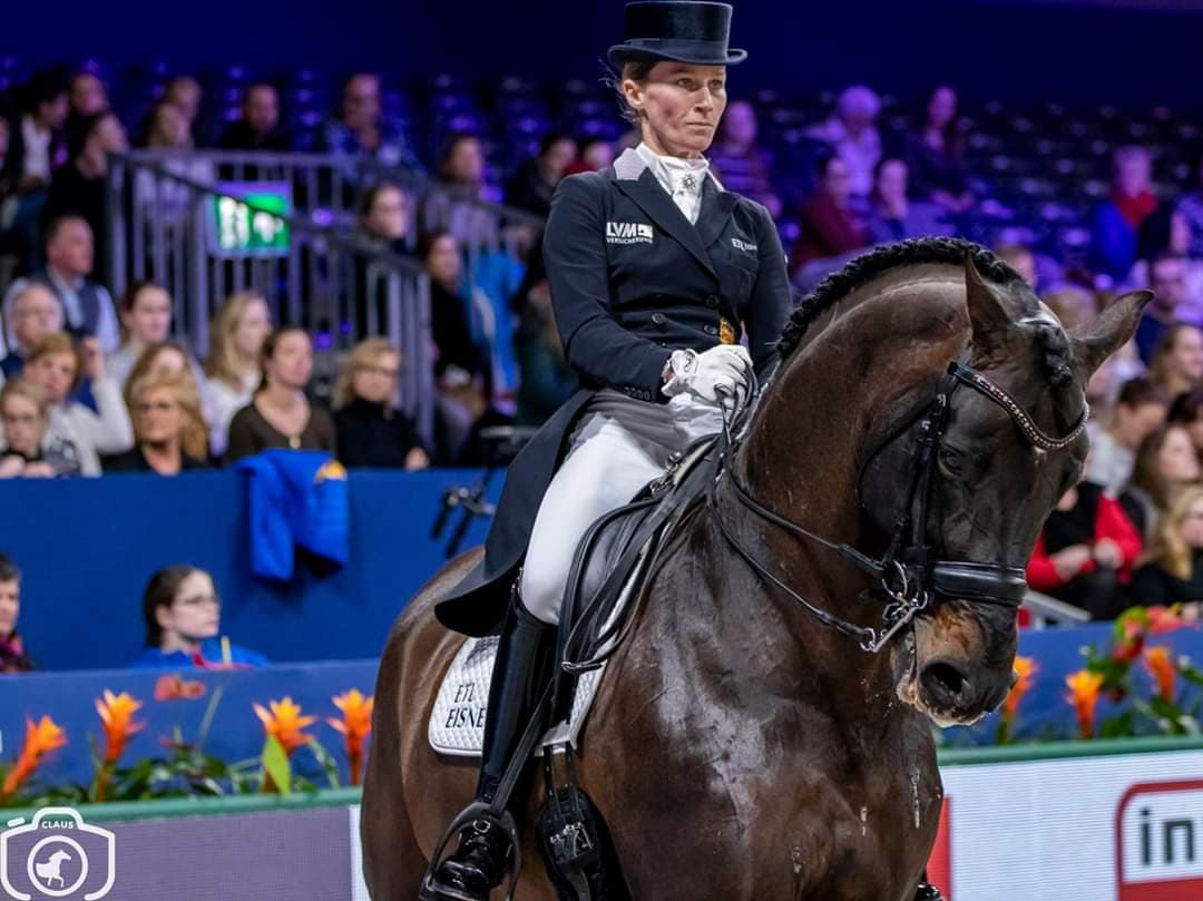 New 6-year old KWPN stallion for Helen Langehanenberg