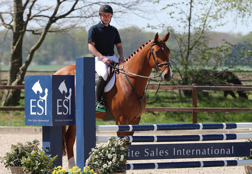Son of Nabab de Reve moves to new owners for 176.000 euro at ESI Auction