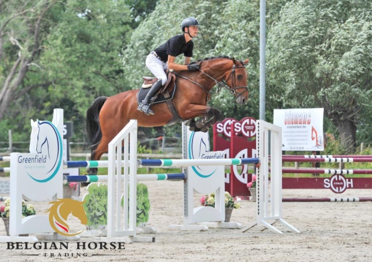 """BHT: """"We zijn erg blij dat de paarden uit de vorige veiling mooie successen met hun nieuwe ruiters behalen"""""""