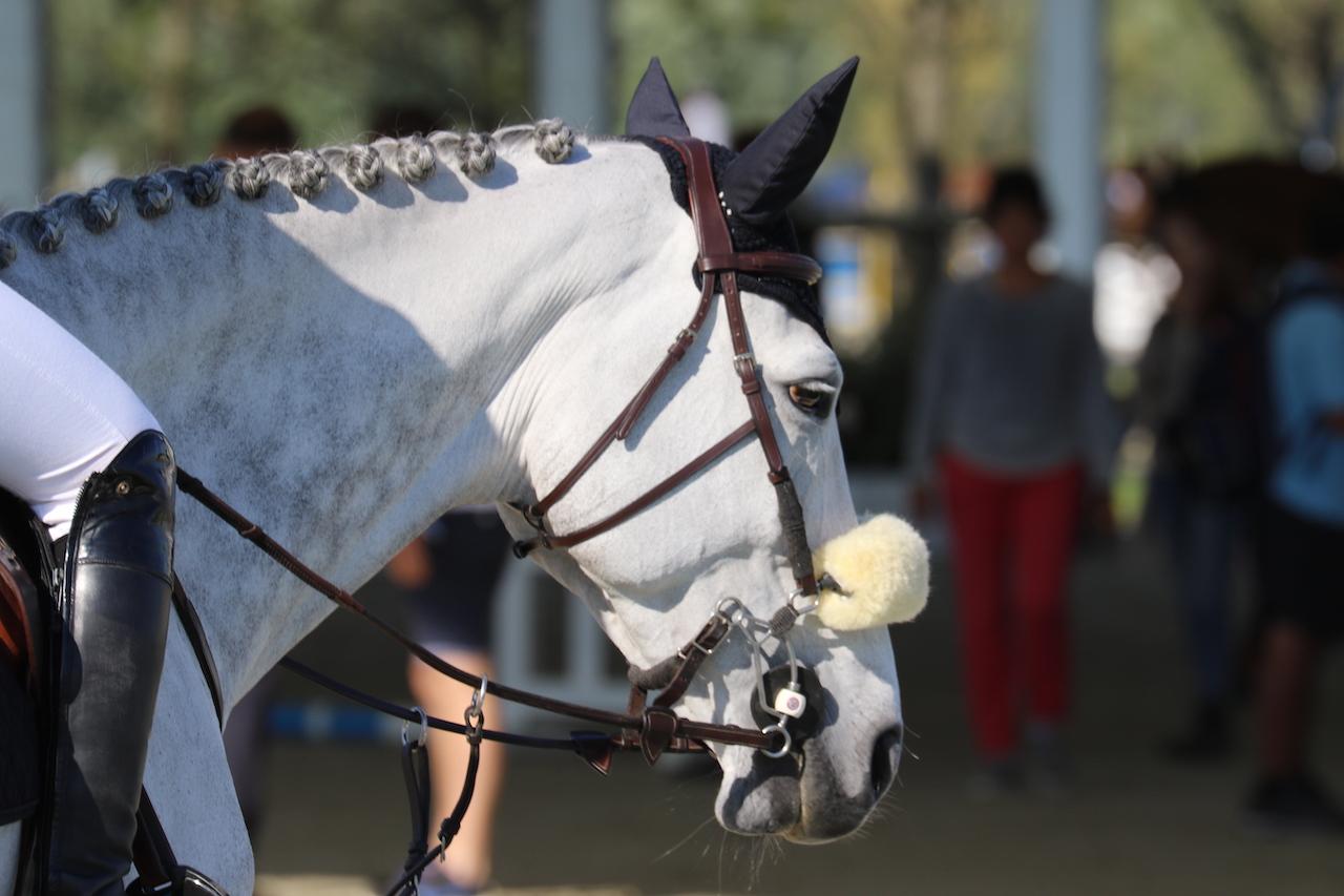 Holsteinse hengst Charaktervoll moet verrichtingsonderzoek opnieuw doen na positieve dopingtest