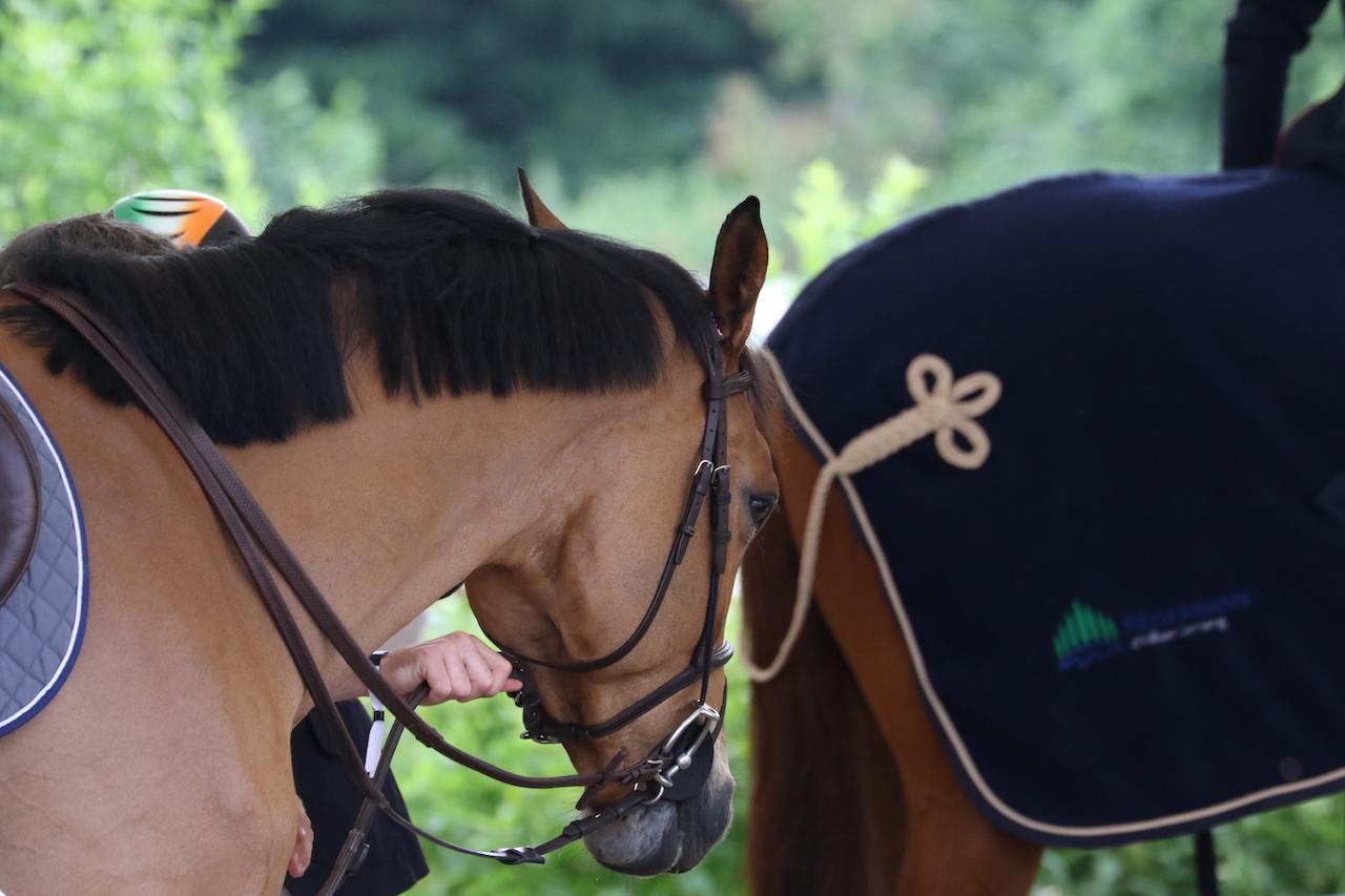 Les demandes et ventes de chevaux ont augmenté pendant la crise corona