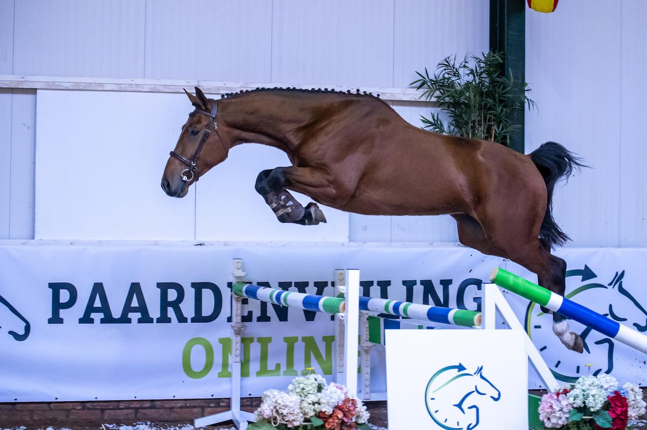 Twee- en driejarige springpaarden van Paardenveilingonline.com zeer in trek