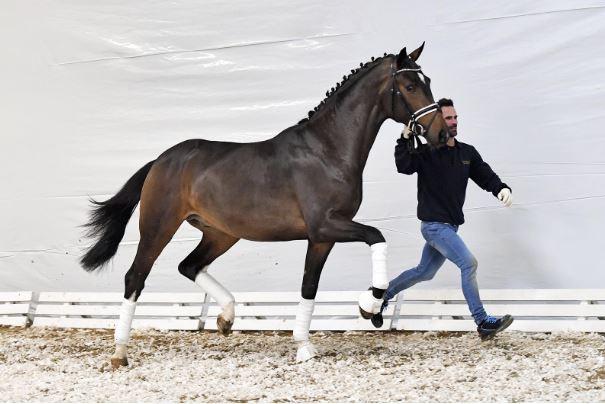 Deep Donnerhall voor 66.000 euro naar Nederland via PS Online Auction
