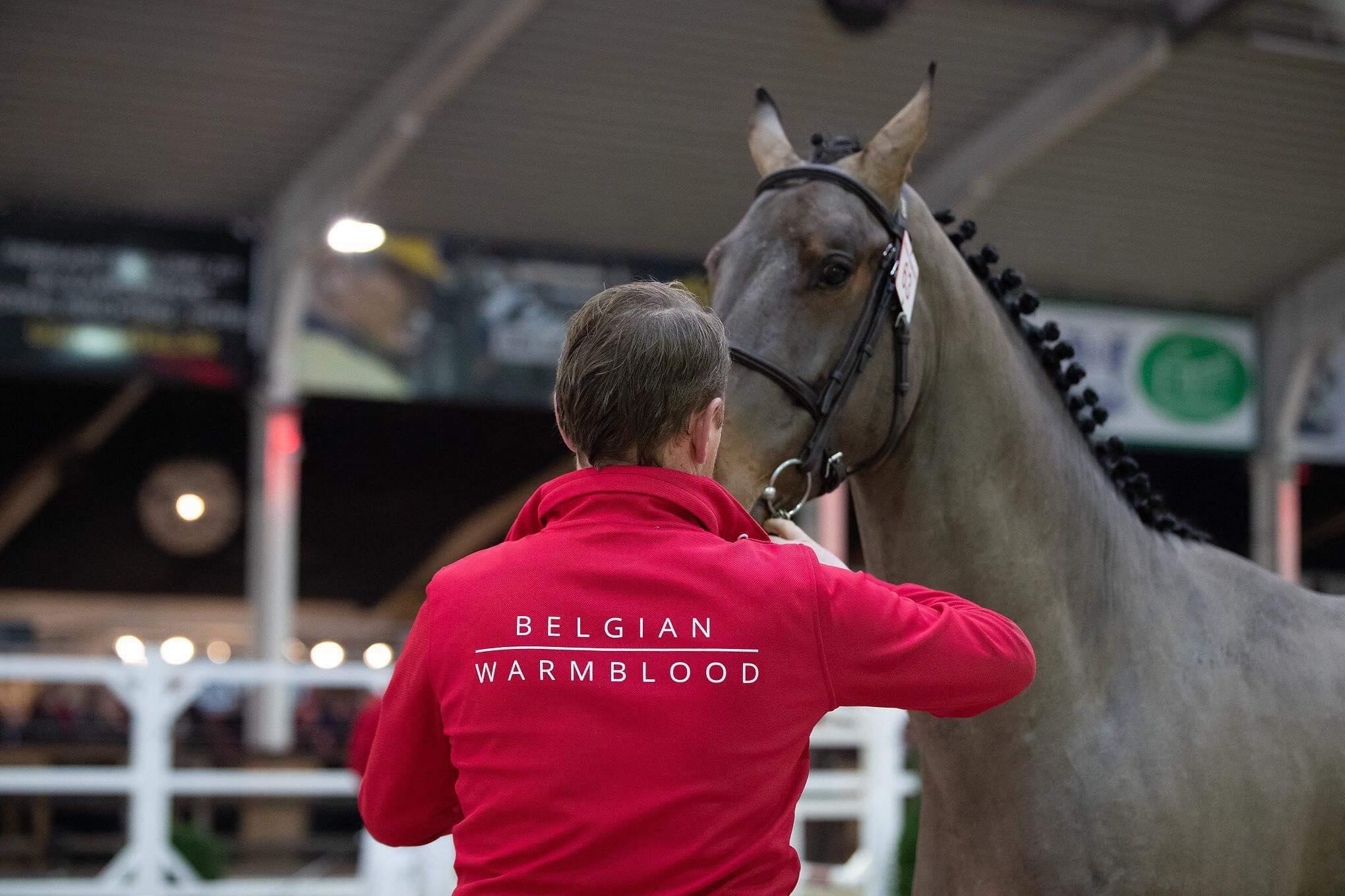 """Stefaan De Smet: """"We merken goede springpaarden uit sterke bloedlijnen."""""""