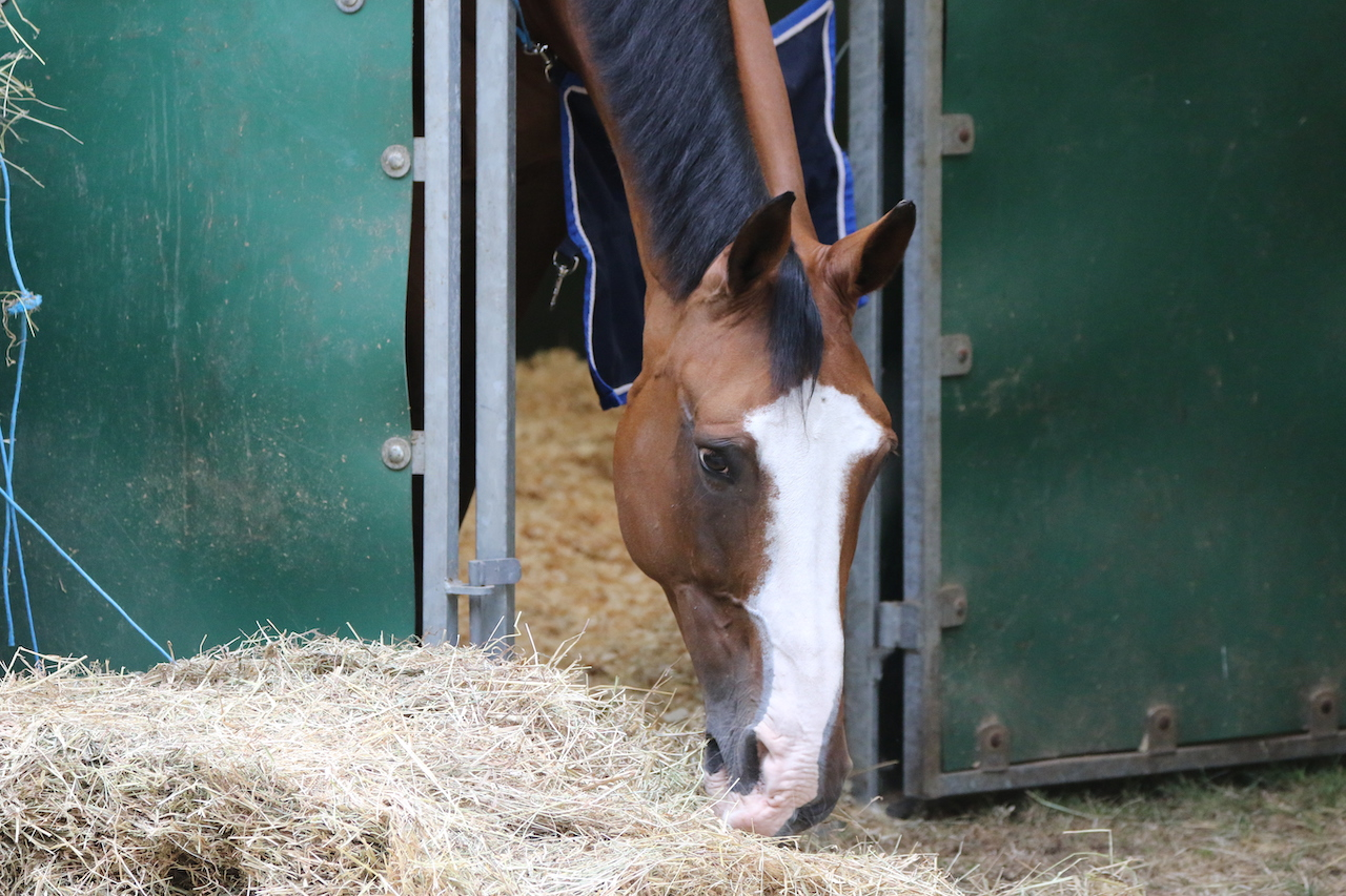 Horse tests positive for EHV-1 after show in Gorla Minore