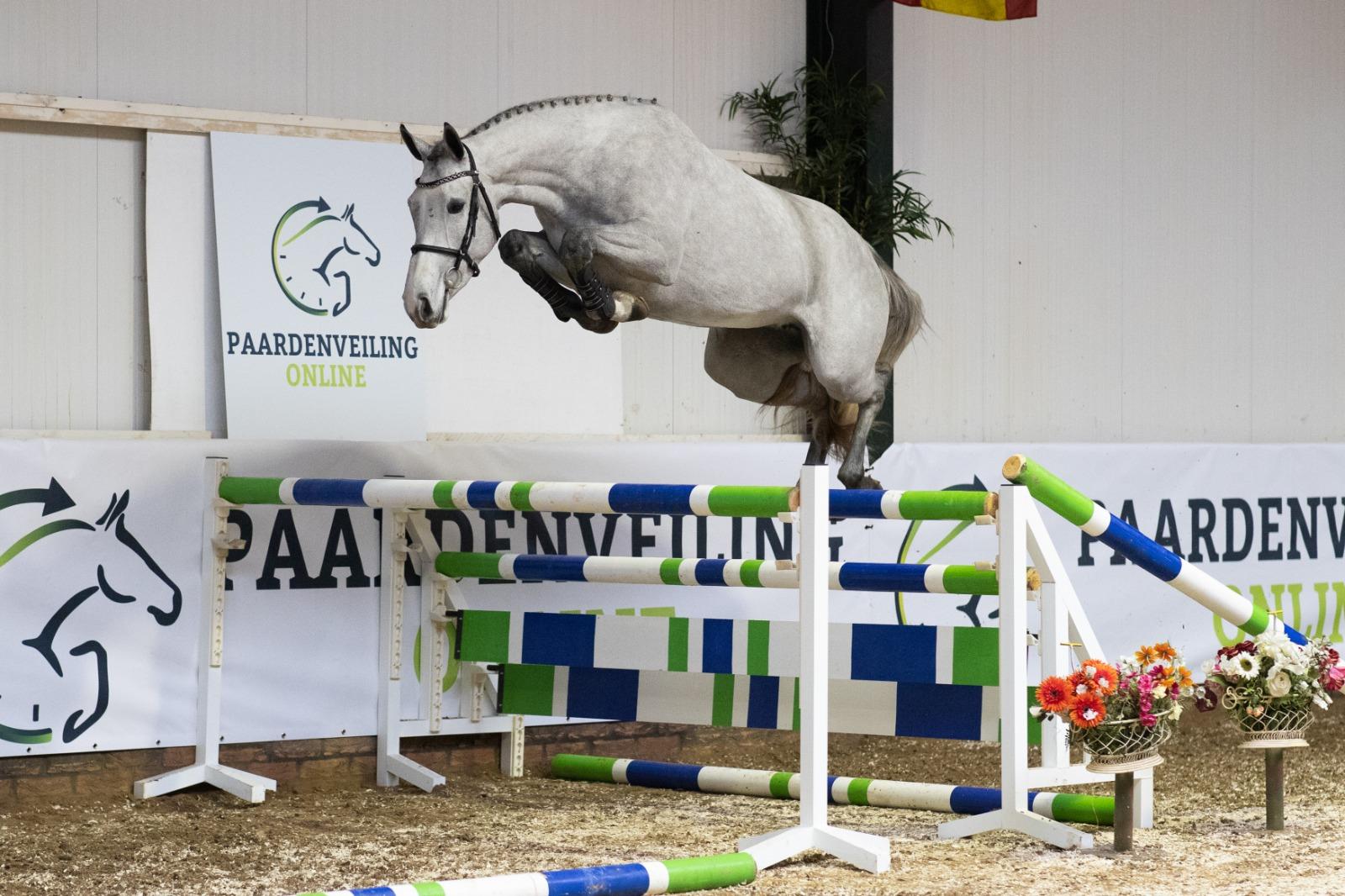 Paardenveilingenonline.com start het jaar met schitterende collectie