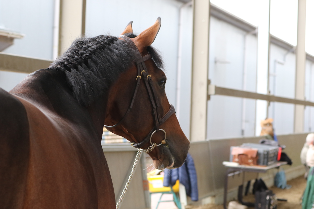 """Organization Sunshine Tour: """"Horses may leave the competition but NOT without health certificate"""""""