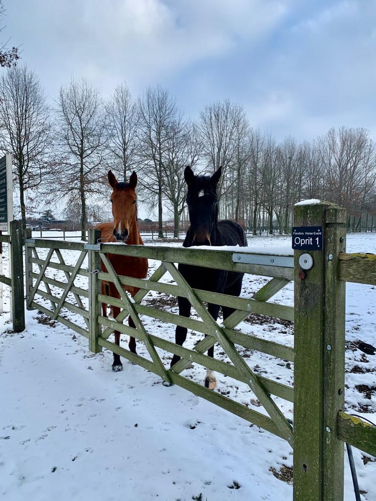 Meer klachten over paardenverwaarlozing door negatieve temperaturen