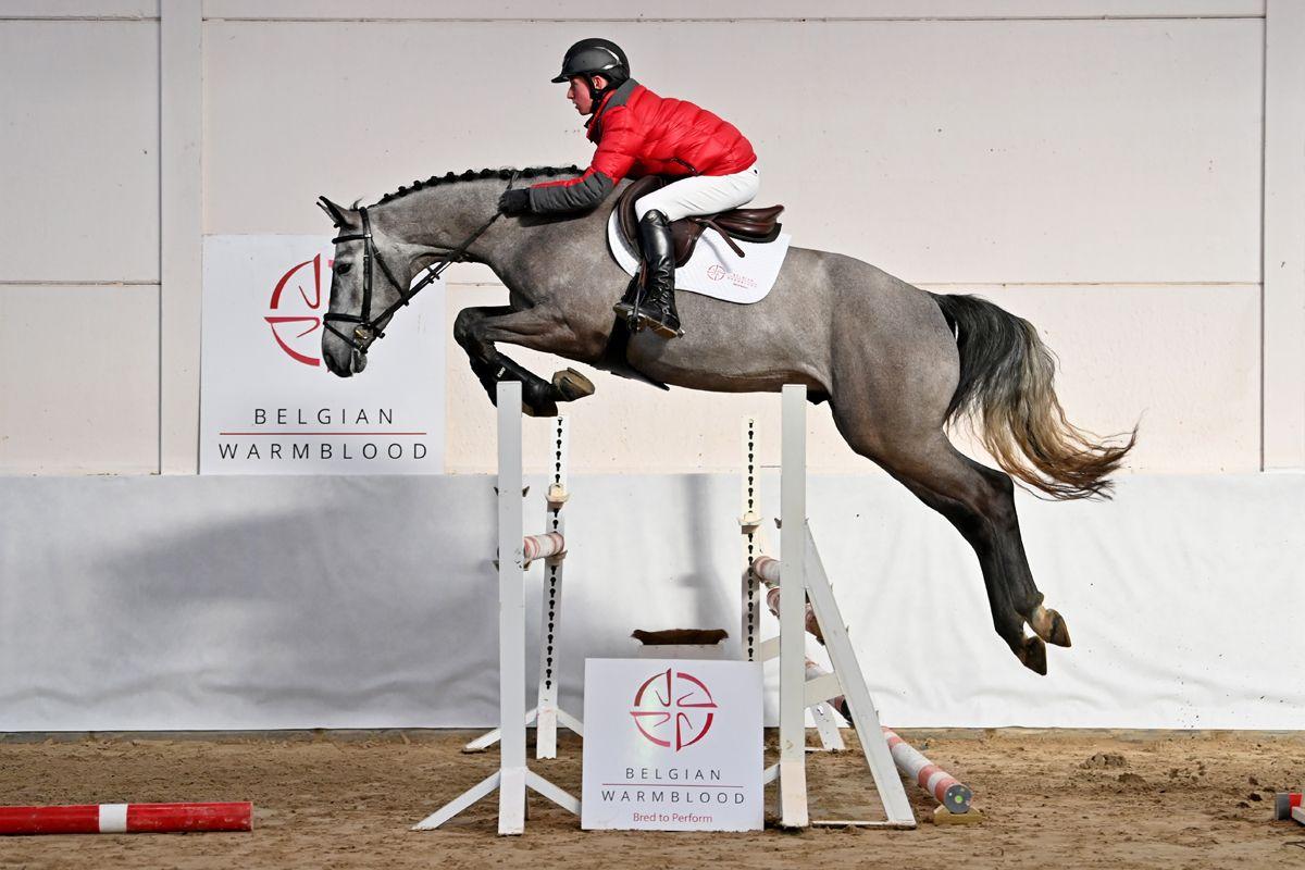Suus Kuyten koopt veilingtopper BWP Young Horse Auction