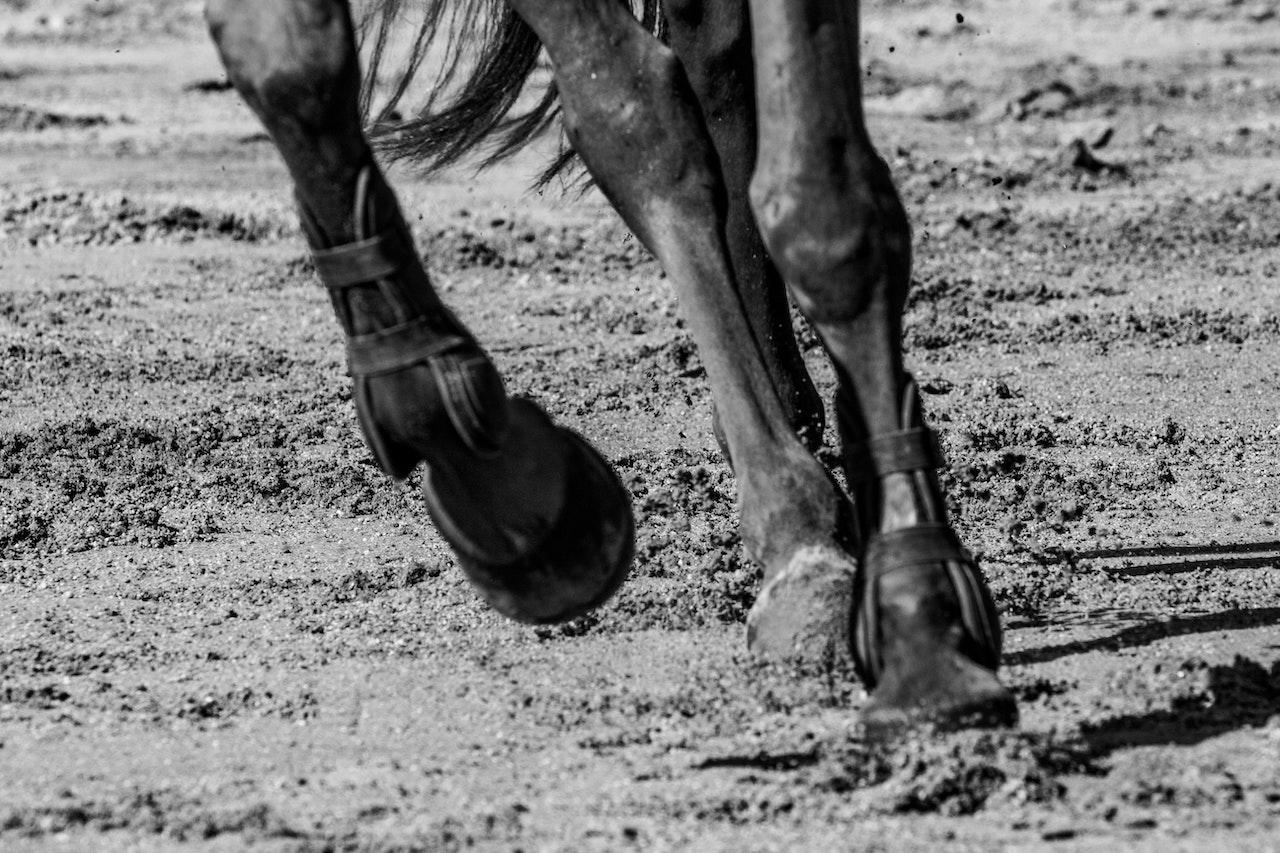 Grave accident de la route sur l'A63 pour la cavalière Grand Prix Joanna Robinson: un cheval meurt