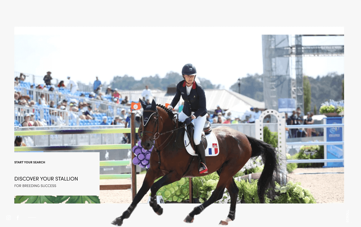 Equbreeding makes foreign sport stallions available for breeding