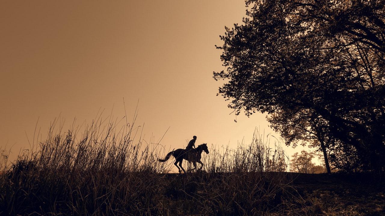 Je paarden verzekeren: waarom samenwerken met een gespecialiseerde verzekeringsmakelaar ?