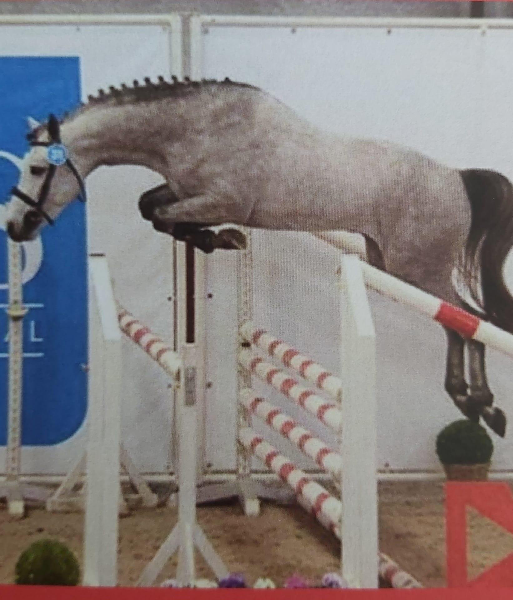 Dit zijn DE dekhengsten voor uw pony!