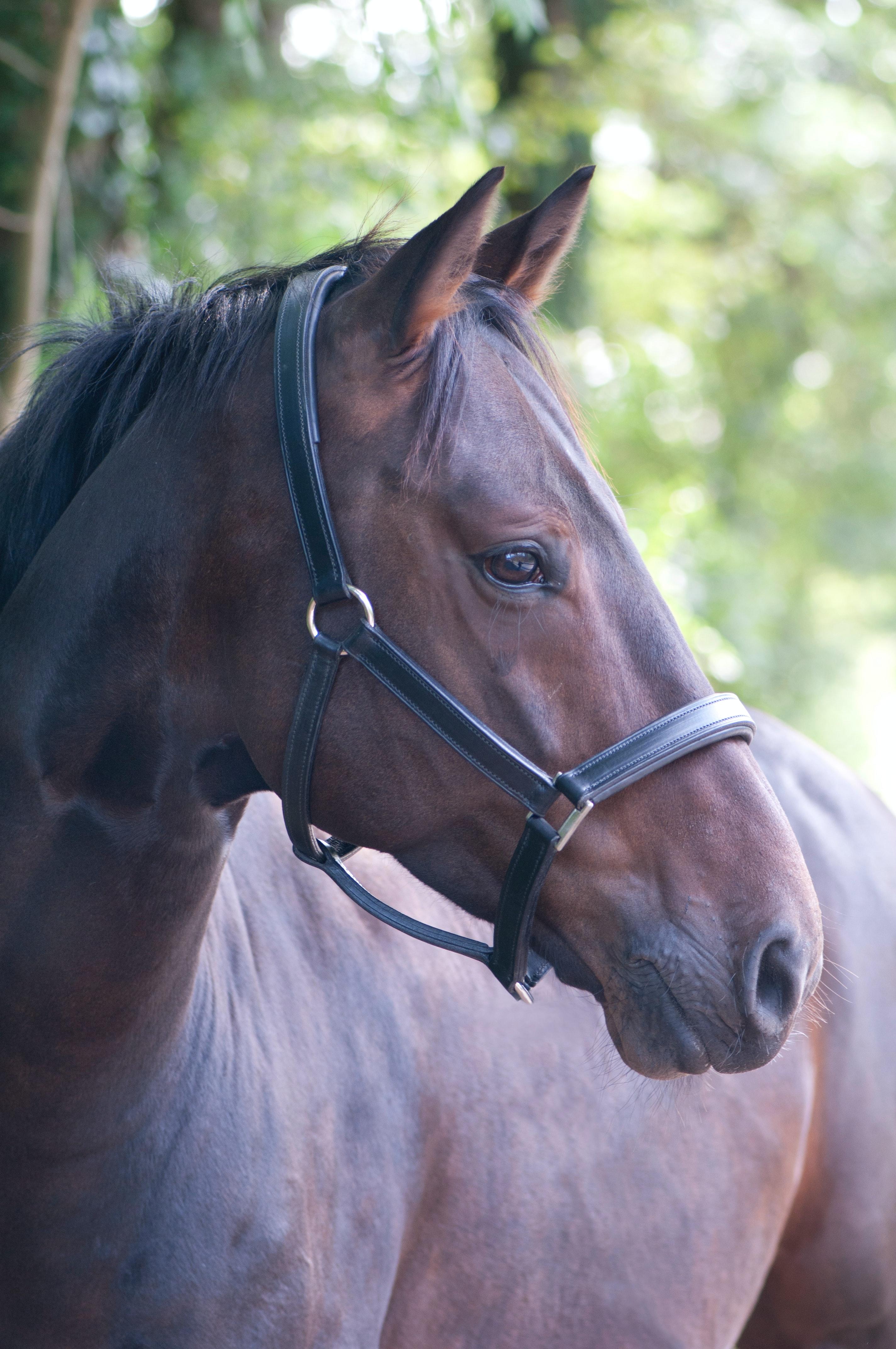 Heropstart amateursport: hoe breng je jouw paard veilig terug in het werk?