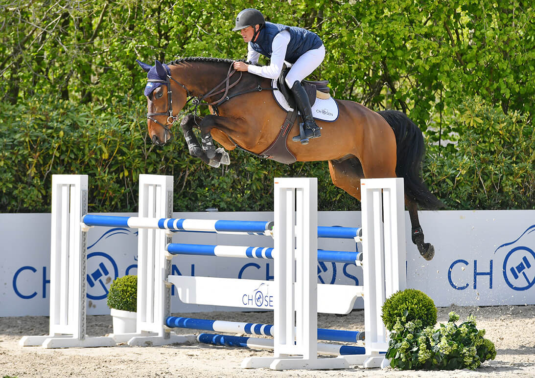Chosen: four-year-old Mister Gold moves to States for 118.000 euro