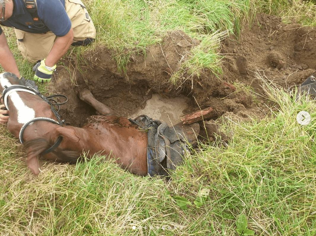 Paard zakt weg in gat van ruim 2 meter diepte