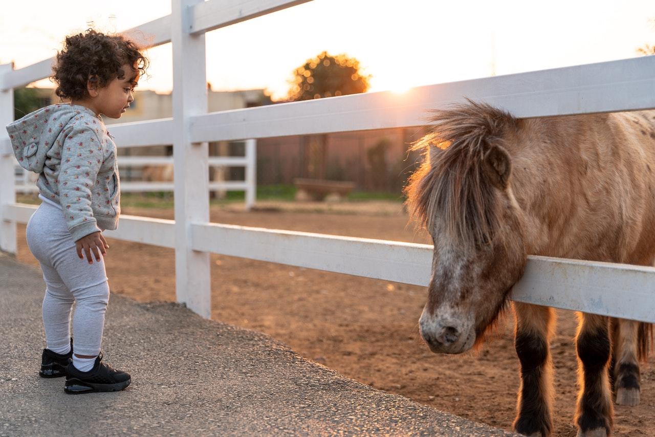 De zes types pony's die elke ruiter gereden heeft in zijn carrière