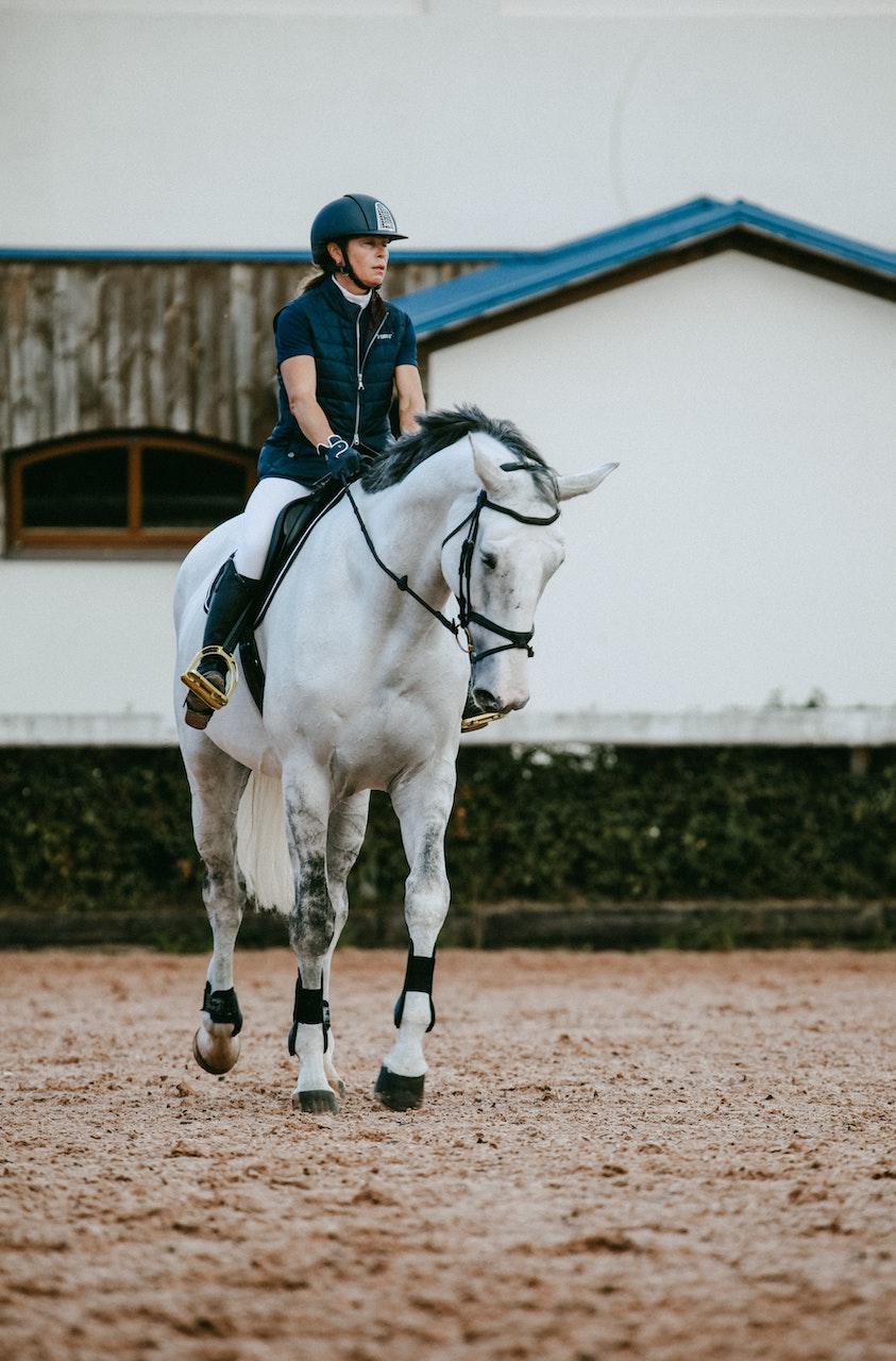 """Prijzen paardenmarkt in stijgende lijn: """"Steeds moeilijker om een paard voor een normale prijs te vinden"""""""