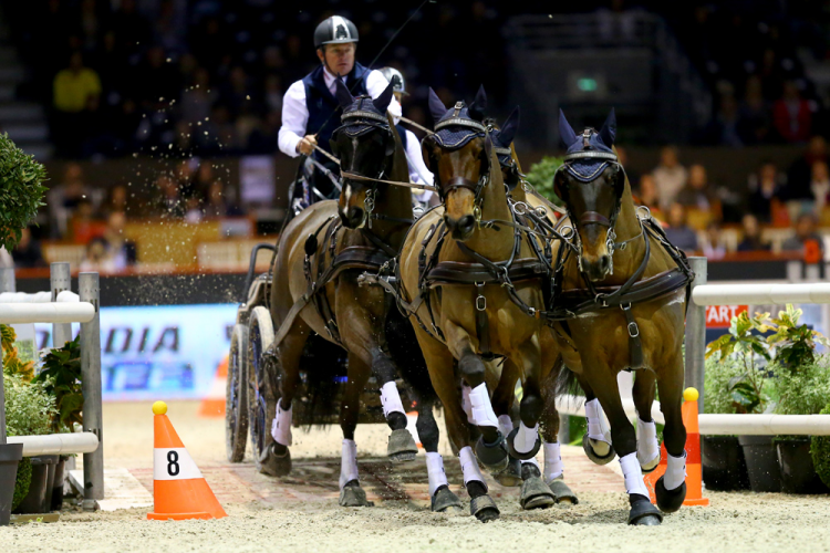 Boyd Exell shares podium with de Ronde and Chardon in World Cup Finals Driving of Bordeaux