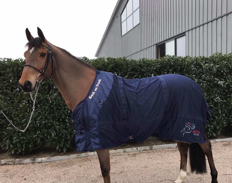 New top horse for Patrice Delaveaux