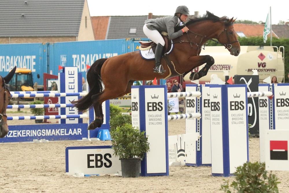 BWP Elite stallion, Hos d'O for Harrie Smolders