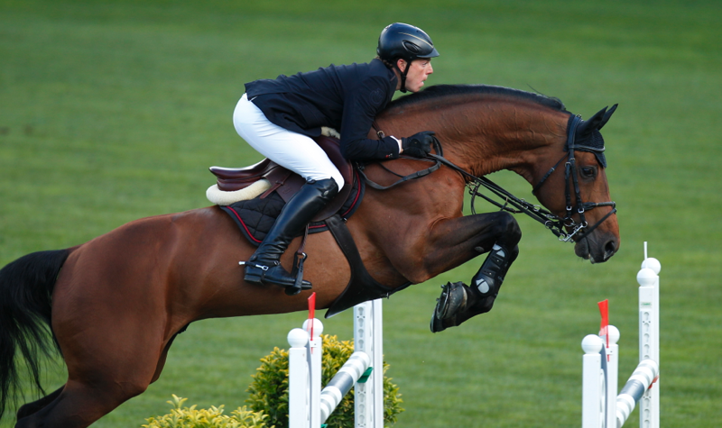 Chacco-Blue still in the lead in WBSFH Show Jumping Sire Ranking, Jazz number 1 Dressage Sire