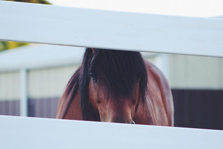 Sale of Goods Act applies to horse sales even when a trader sells and an individual buys