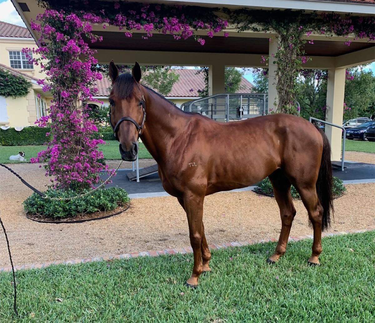 New horse for Georgina Bloomberg