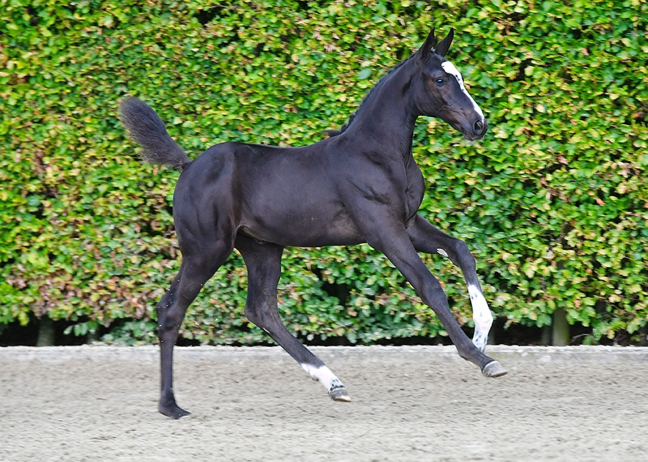 """Darragh Kenny: """"Equbreeding wants to bring foals of proven dam lines and top mares together in one online auction"""""""