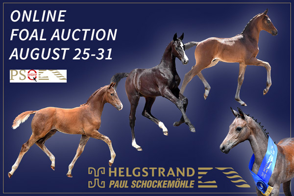 Third Schockemöhle/Helgstrand International Online Foal Auctions coming up