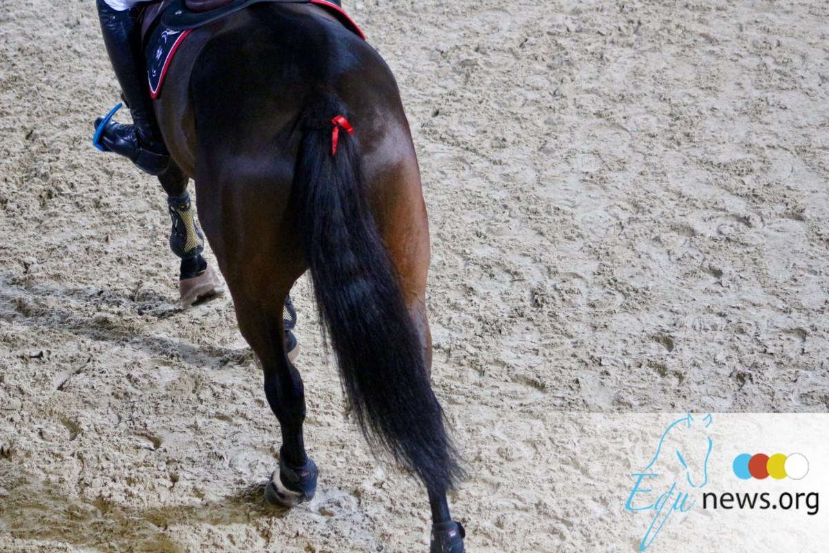 La FRBSE souhaite la bienvenue à Stefaan Lammens, le premier Communication Manager de la Fédération Royale Belge des Sports Equestres