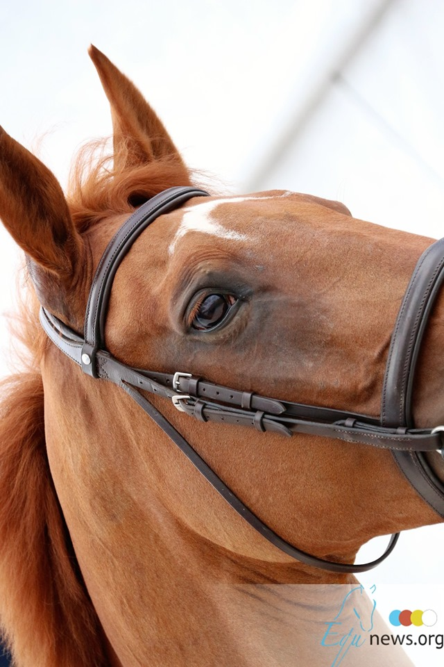 La Région et le Conseil des Chevaux s'engagent pour développer la filière cheval en Hauts-de-France