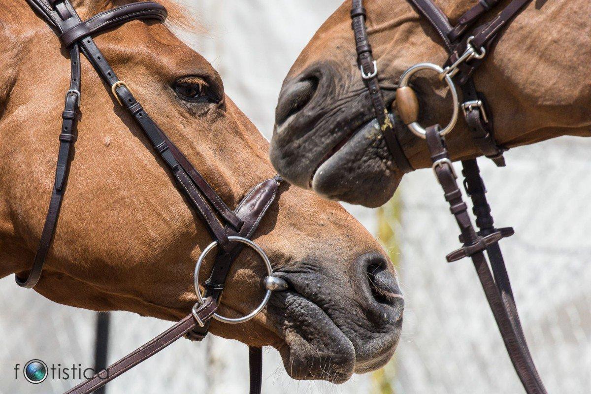 De 5 meest dure paarden ter wereld