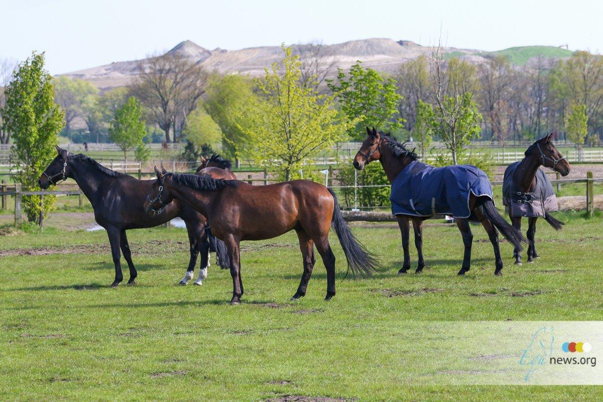 Dier&Recht vraagt politiek in te grijpen tegen 'vereenzaming' paarden.