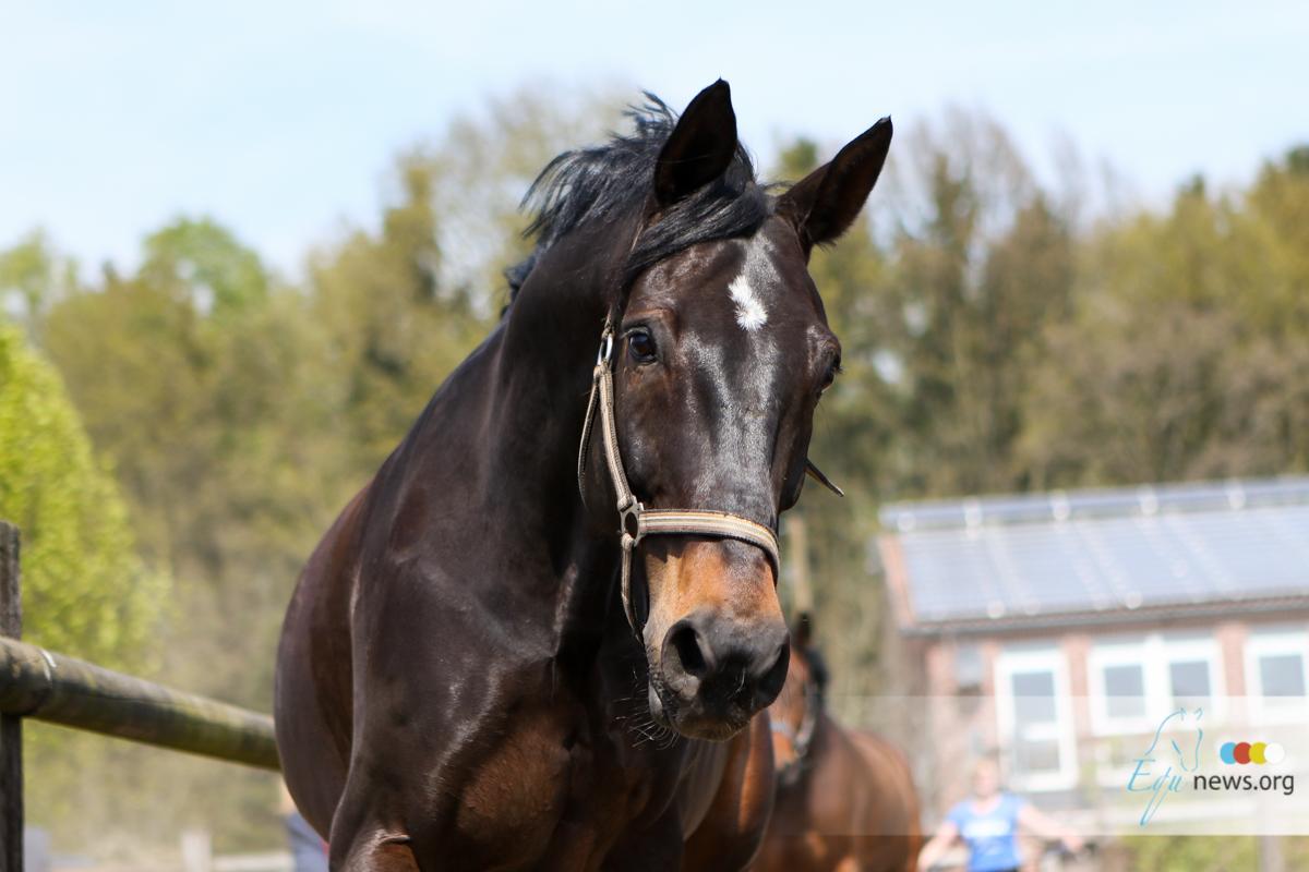 Onderzoekt toont aan: paarden herkennen hun eigen spiegelbeeld