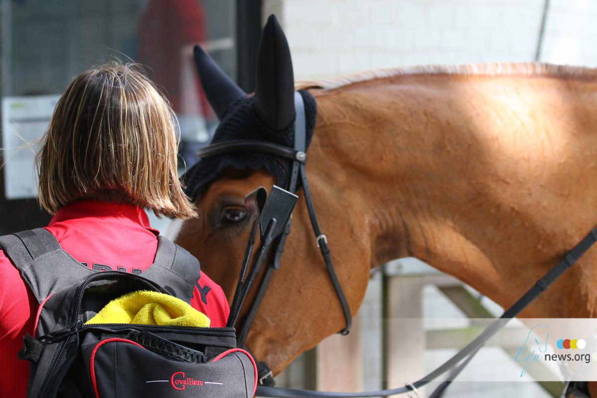 Groomen, de droomjob voor elke paardenfanaat. Maar wat zijn je rechten en hoeveel kan je verdienen?