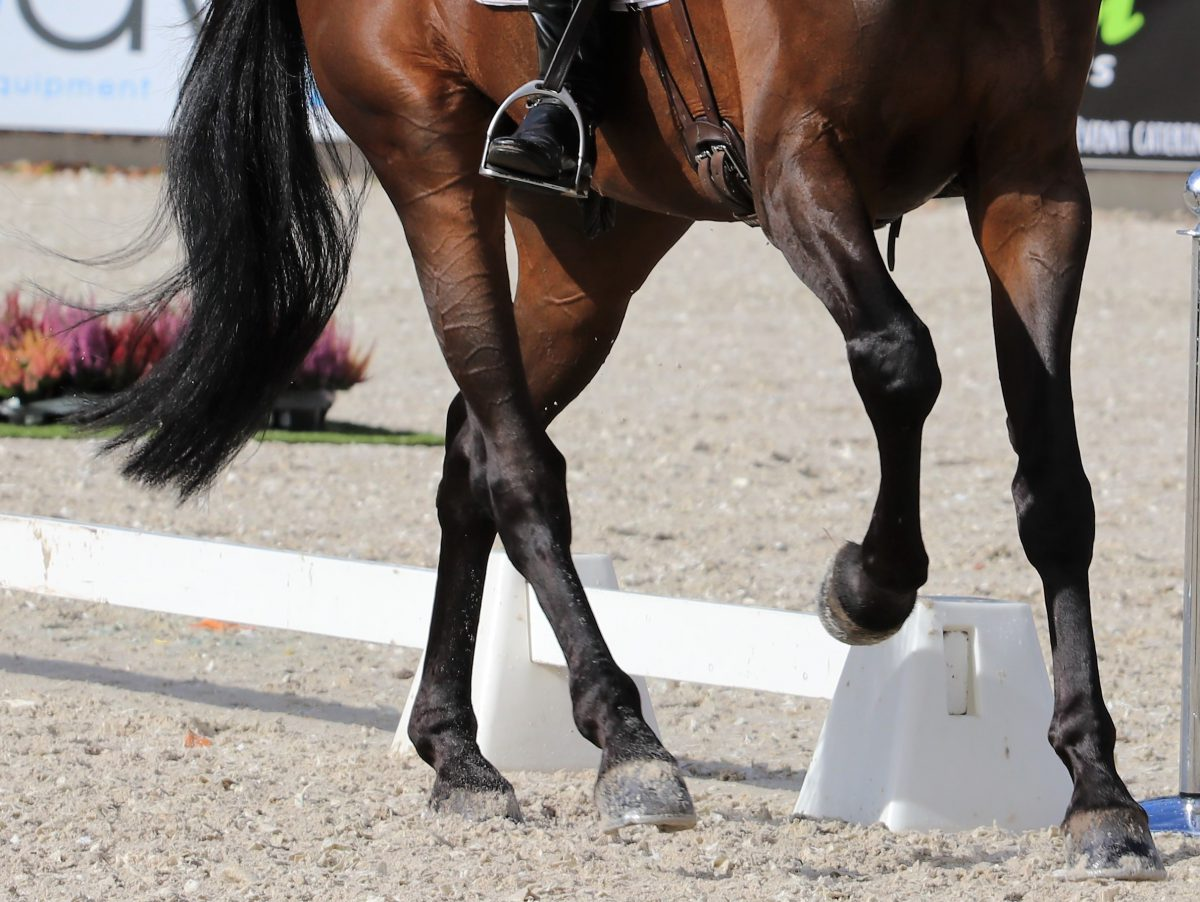 Kampioen-pony, Happy Feet  krijgt opnieuw andere amazone