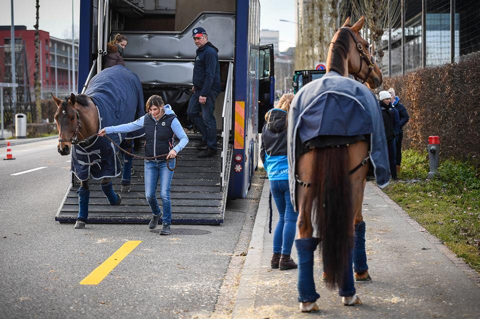 KLM transporteert weer paarden naar China