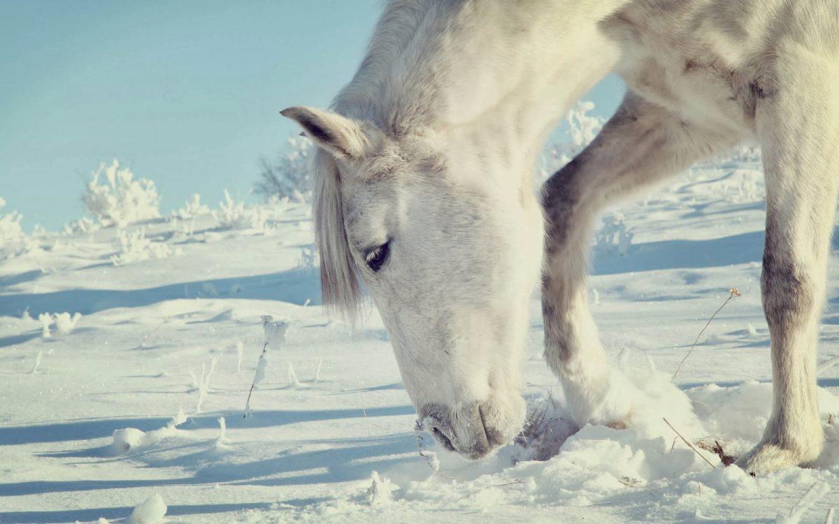 Enkele voedingstips om je paard ook tijdens de winter gezond te houden