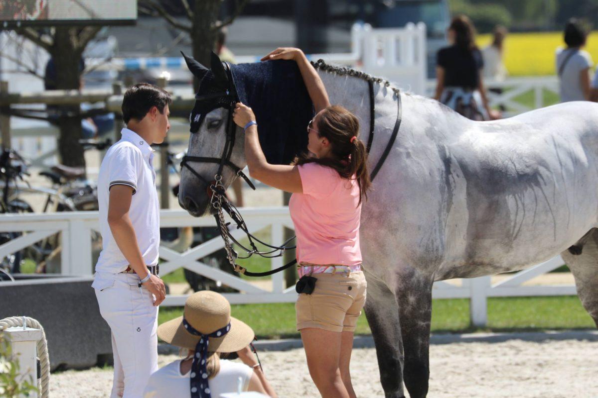 Paardenfokker geen ondernemer voor de omzetbelasting